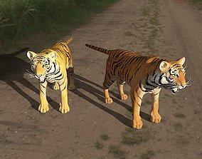tiger animals in wild field 3D model