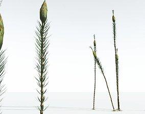 EVERYPlant Suckows Horsetail Tree 06 --16 Models--
