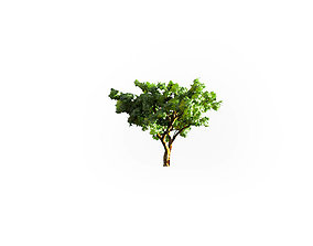 Low Poly Tree Stylish 3D asset VR / AR ready