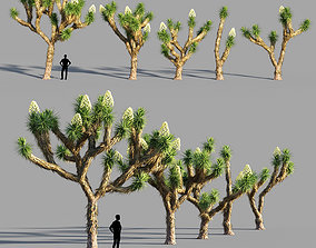 Joshua tree collection 3D