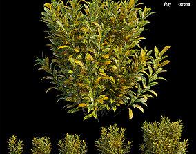 Croton plant set 16 3D model landscape