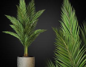 3D model Plants collection 268