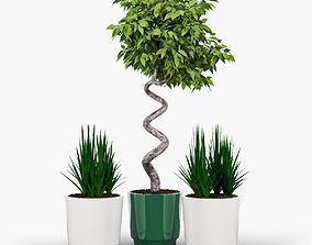 3D model Ficus Set
