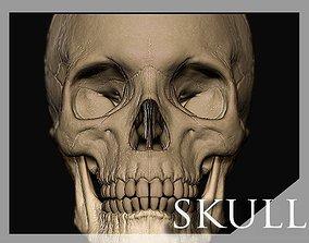 Skull anatomical 3D model