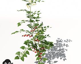 3D XfrogPlants Cherry Tomato