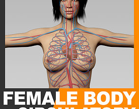 3D model Human Female Body and Circulatory System -
