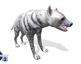 animated White Hyena Rigged Animated Lowpoly 3D Model