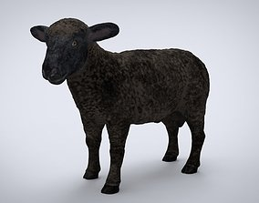 3D model BLACK SHEEP