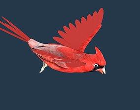 3D Cardinal bird