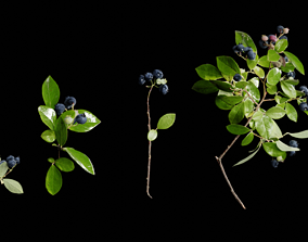blue berry bushes 3d model with low polygon
