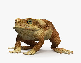 3D Cane Toad HD