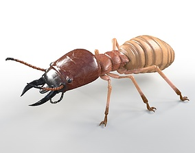 3D model Termite Rigged Hairs