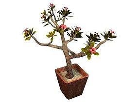 Japan Frangipani Tree 3D asset