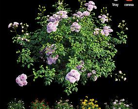 Rose plant set 64 3D model