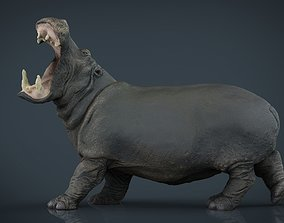 3D model game-ready Hippopotamus