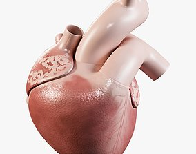 Human Heart 3D model low-poly PBR