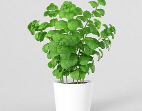 3D asset realtime Mint Plant