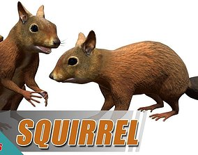 Squirrel 3D asset animated game-ready