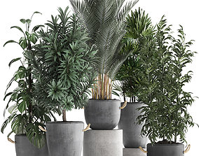 3D model Collection of Exotic Plants 413
