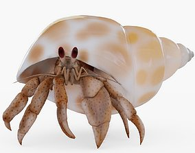 Hermit Crab Rigged with Hair 3D asset realtime