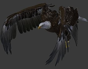Bald eagle 3D