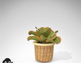 XfrogPlants Kalanchoe 3D model