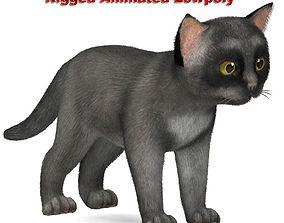 Cat grey 3D asset