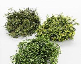 3 Different tree Bush Golden Globe Dwarf Thuja 3D model 1