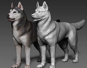 Siberian Husky high polygon 3D model with