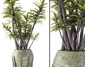 Plant in Pot Flowerpot Exotic Plant gardening 3D model