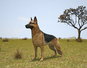 German Shepherd berger 3D model