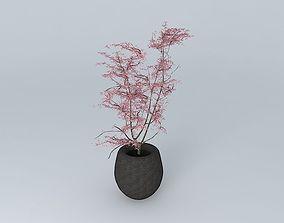 Japanese Maple bonsai 3D
