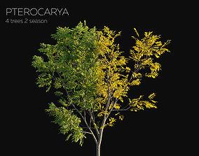 8 Tree Pterocarya 2 season Summer Autumn 3D model