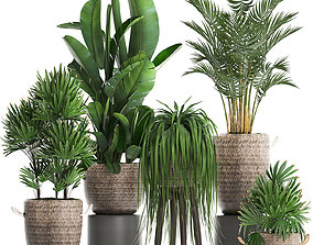 Collection of exotic plants Croton 431 3D