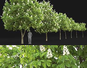 3D model Chestnut-tree 01 H5-6m
