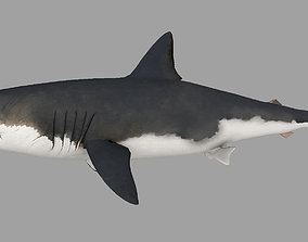 3D model low-poly Animal - Shark