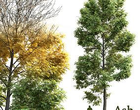 3D Ash-tree Fraxinus V2