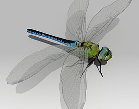 Dragonfly Animated 3D asset