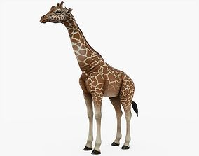 3D model VR / AR ready Giraffe