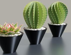 3D Succulent Potplants