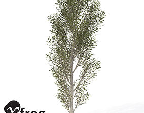 3D XfrogPlants Black Poplar
