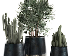 Houseplants in a black pot for the interior 912 3D