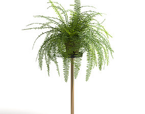 3D Fern plant on stand