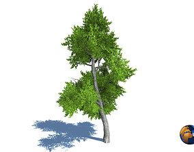 Tree Nature Forest Environment 3d model low-poly