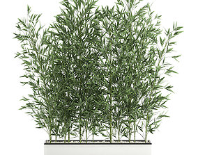 Bamboo bush for the interior in a white flowerpot 3D model
