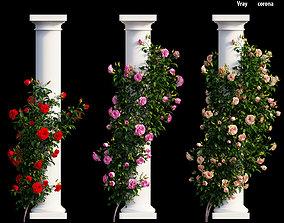 Rose plant set 10 3D