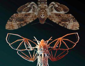 Deaths Head Hawkmoth Skeleton 3D printable model