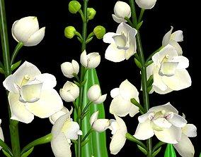 Flower Orchid 3D model