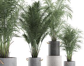 Decorative palm in a flowerpot 598 3D model