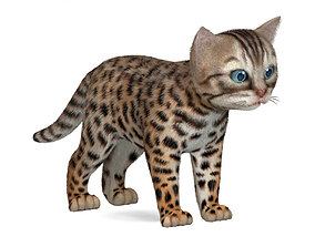 3D model kitten